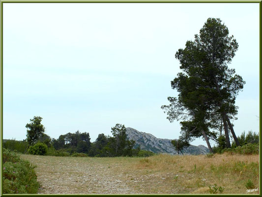 Le plateau sur les hauteurs du massif de La Caume dans les Alpilles (Bouches du Rhône)
