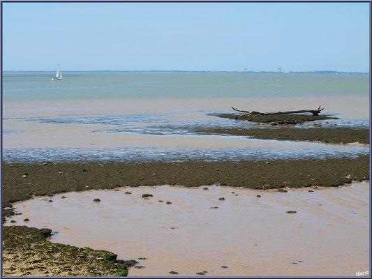 Bois flotté en bordure de La Gironde à Talmont-sur-Gironde (Charente-Maritime)