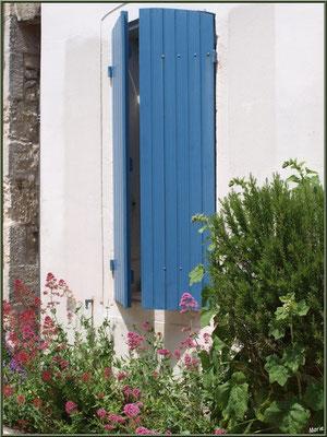 Fenêtre aux volets bleus entrecroisés et valérianes à Talmont-sur-Gironde (Charente-Maritime)