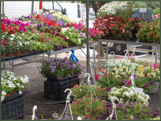 Marché de Provence, mardi matin à Vaison-la-Romaine, Haut Vaucluse (84), étal de fleurs