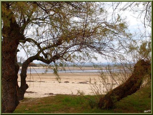 Tamaris et la plage