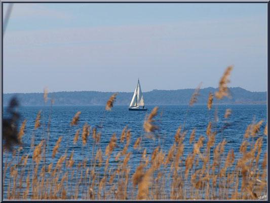 Voilier derrière les roseaux sur le Lac de Sanguinet (Landes)