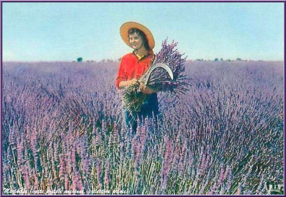 Cueilleuse lavande (carte postale ancienne, collection privée)