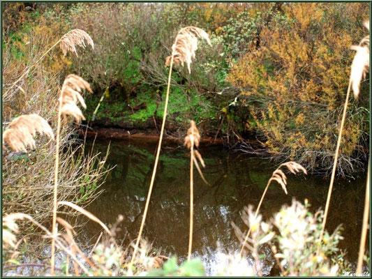 Roseaux et reflets dans un réservoir, Sentier du Littoral, secteur Moulin de Cantarrane, Bassin d'Arcachon