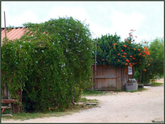 Cabanes fleuries dans une ruelle du port ostréicole, Village de L'Herbe, Bassin d'Arcachon (33)