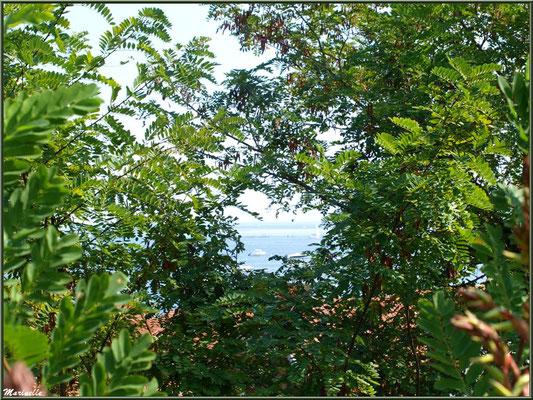 Trouée de verdure sur le Village de L'Herbe, Bassin d'Arcachon (33)