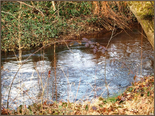 Reflets hivernaux sur le petit ruisseau longeant le sentier menant à la Fontaine Saint Jean à Lamothe, Commune du Teich (Bassin d'Arcachon)