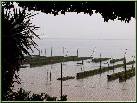 Propriété avec vue sur le Bassin au quartier Chapelle Algérienne, village de L'Herbe, Bassin d'Arcachon (33)