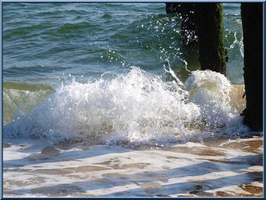 """""""La Pointe"""" : bord de plage et vagues éclaboussant sur des piquets (Cap Ferret)"""