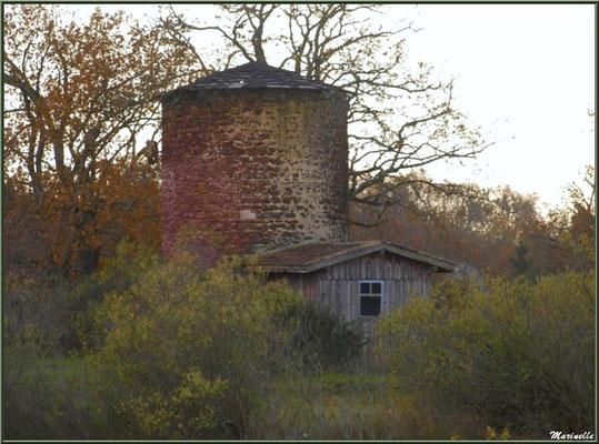 Le Moulin de Cantarrane en décor hivernal, Sentier du Littoral Bassin d'Arcachon