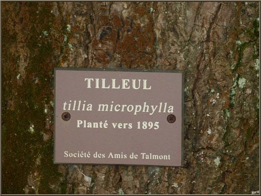 Panneau sur tilleul planté vers 1895 sur placette de la Mairie à Talmont-sur-Gironde (Charente-Maritime)