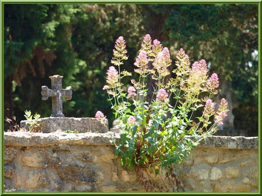 Valérianes dans le mur du cimetières