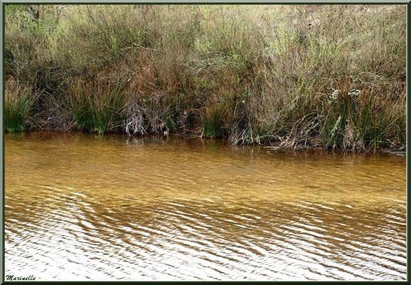 Reflets d'or dans un réservoir, Sentier du Littoral, secteur Moulin de Cantarrane, Bassin d'Arcachon