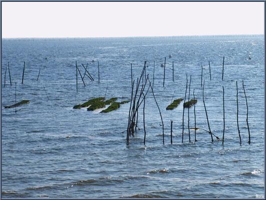 """Parc à huîtres face au quartier """"Villa Algérienne"""" , village de L'Herbe, Bassin d'Arcachon (33)"""