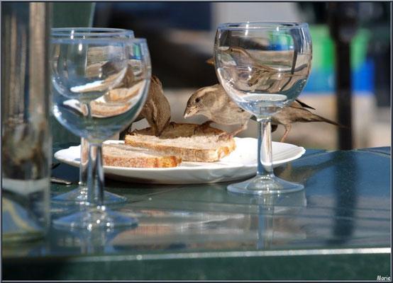 Moineaux à table