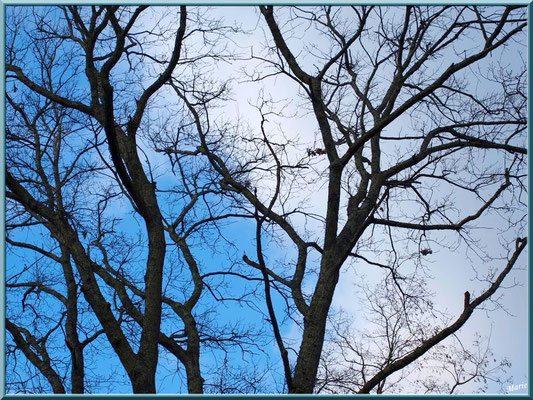 Le ciel par dessus les arbres au Parc de la Chêneraie à Gujan-Mestras (Bassin d'Arcachon)