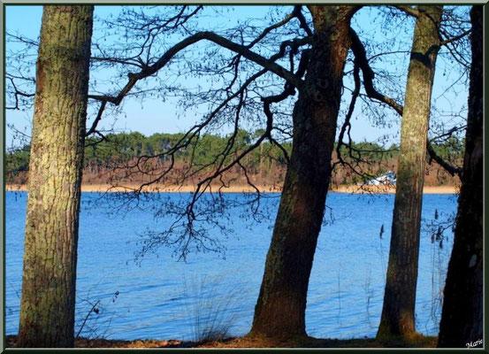 Lac de Sanguinet et ses aulnes (Landes)