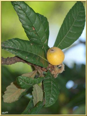Arbre à fruits dans le jardin