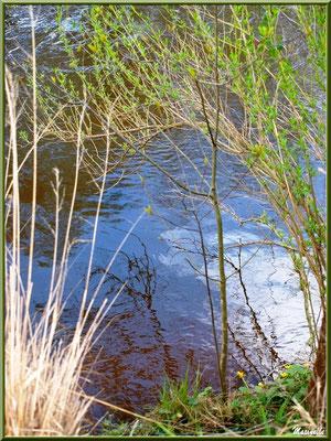 Herbacées, arbrisseau printanier et reflets en bordure de La Leyre, Sentier du Littoral au lieu-dit Lamothe, Le Teich, Bassin d'Arcachon (33)