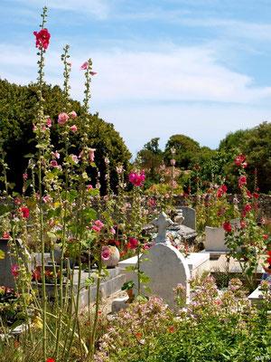 Le cimetière marin ou ancien cimetière à Talmont-sur-Gironde (Charente-Maritime) à la saison des roses trémières (courant jullet)