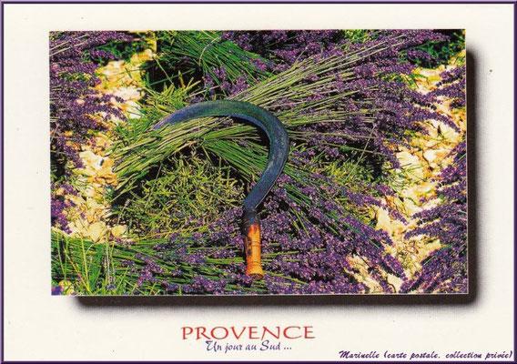 Serpette et lavande (carte postale, collection privée)