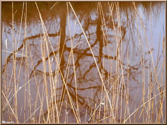 Roseaux et reflets sur un ruisseau, Sentier du Littoral secteur Pont Neuf, Le Teich, Bassin d'Arcachon (33)