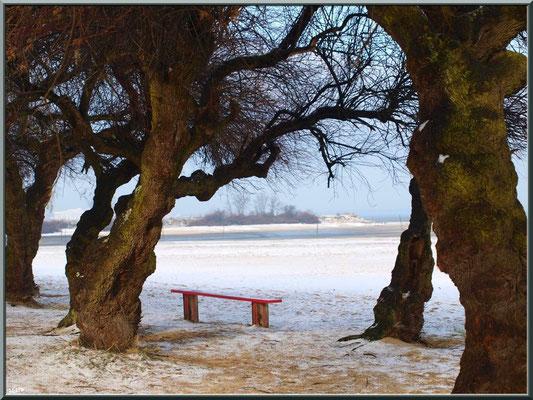 Plage et tamaris en habit neigeux (février 2012)