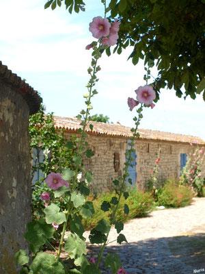 Ruelle et boutiques à Talmont-sur-Gironde (Charente-Maritime)