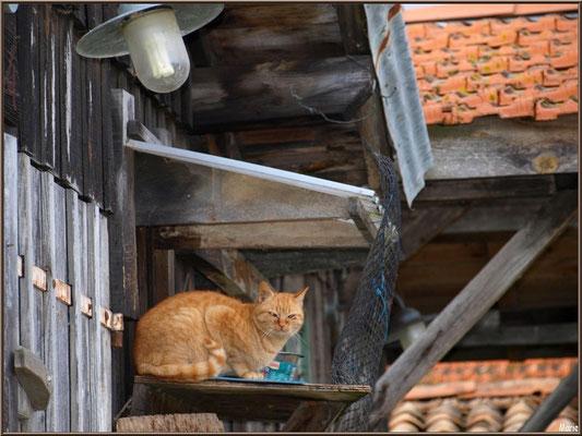 Cabane 15 et son chat