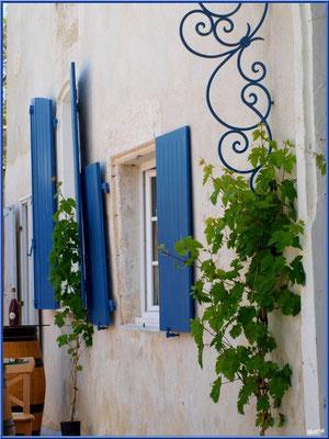 Fenêtres commerçantes (bar à vin) à Talmont-sur-Gironde (Charente-Maritime)
