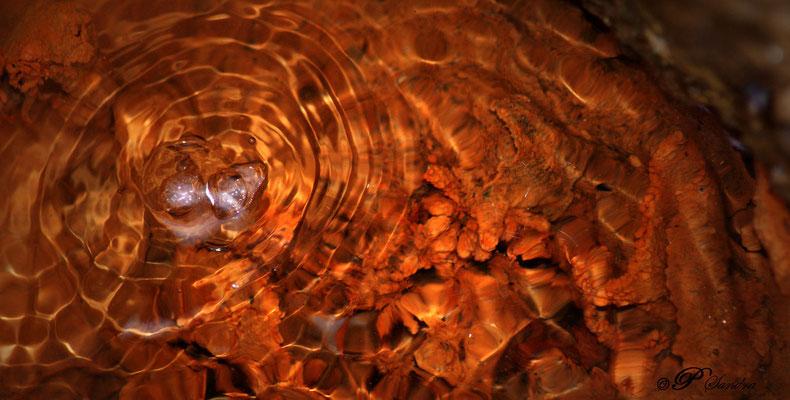 Auvergne ... La Source de la Tête de Lion , une source d'eau salée , boullionnante par des remontées de Gaz carbonique , autour de laquelle on trouve la présence inattendue de plantes que l'on trouve généralement qu'en bord de mer ... !!!