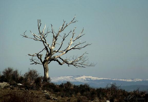 Auvergne ... St Hérent .. 01.03.12