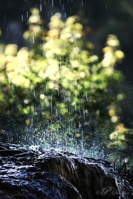 Auvergne ... La source de La Tête de Lion .... 03.10.11
