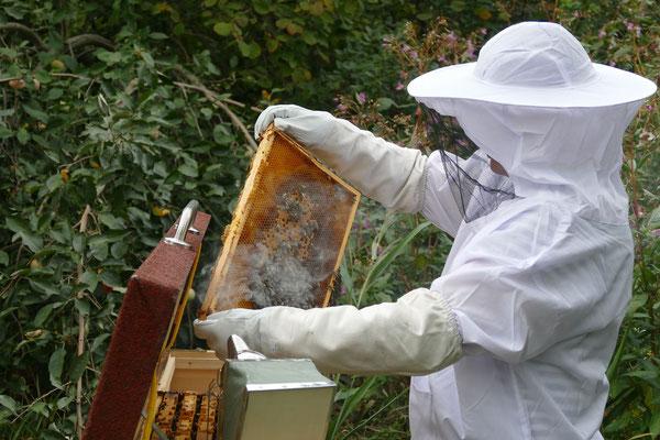 Bienenhaus Classic - Imker mit Raucher und Bienenwabe in der Hand