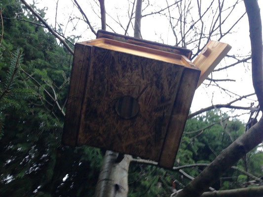 Oben am Baum aufhängen und so neue Bienenschwärme locken
