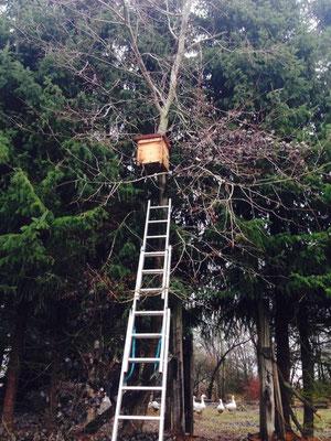 Schwarmlockkasten oben am Baum