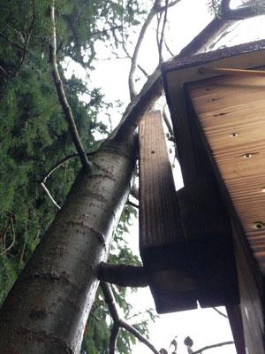 Bienenkasten mit Baumhalterung