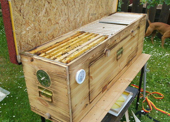 BienenHaus Classic im Garten