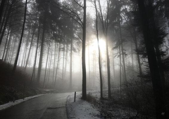 Misty Forest, 2018 – Gränichen, Switzerland