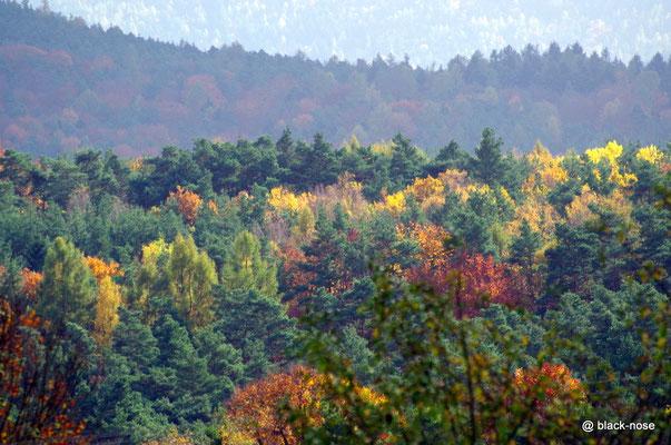 Umgebung des Rosshofs im Herbst