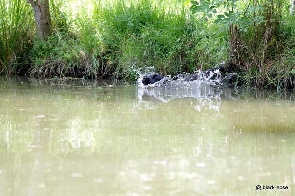"""Paula beim """"Gleiten"""" ins Wasser..."""