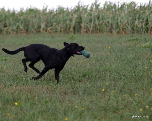 Das Dummy aus dem Maisfeld