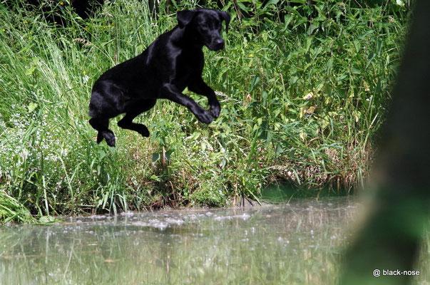 """Lotte beim """"Gleiten"""" ins Wasser... :-)"""