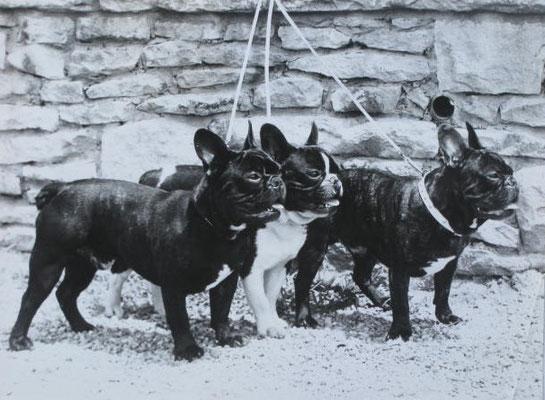 """Die Rüden """"Henri"""", """"Korse"""" und """"Clou"""" bei einer Ausstellung"""