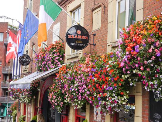 In diesem Dubliner Pub trinkt Marc Wegener das erste Pint of Guinness auf seiner Odyssee durch Irland.