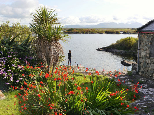 Irische Farbenpracht. Szene aus Connemara.
