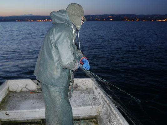 Der Konstanzer Fischer Hans Leib bei der Arbeit. Die am Vortag gesetzten Netze werden eingeholt.