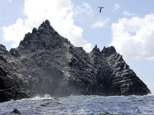 Auf den Skellig Islands brüten tausende Basstölpel.