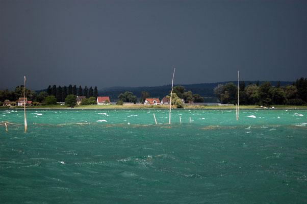 Fischreiser am Untersee.