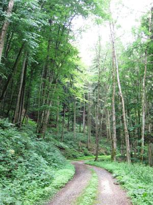 """Im Wald bei Bodman. """"Was soll das jetzt?"""" Schwarz spürte, wie Angst Besitz von ihm ergriff. Werdenberg fuhr auf einem schmalen, geschotterten Waldweg, der steil bergauf führte."""""""